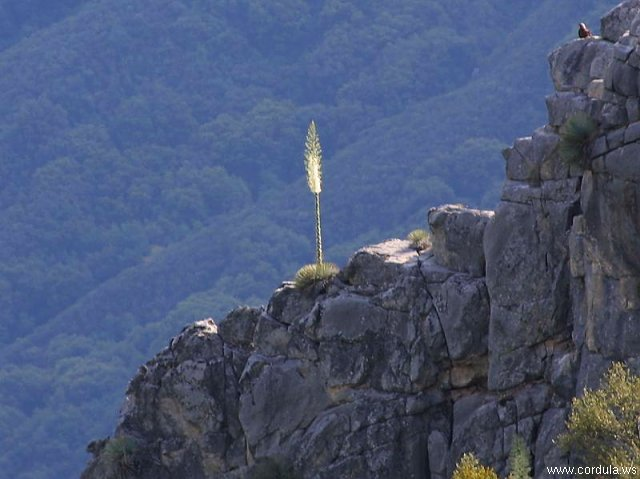 Cordula's Web. PDPHOTO.ORG. Lonely Flower on a Mountain.