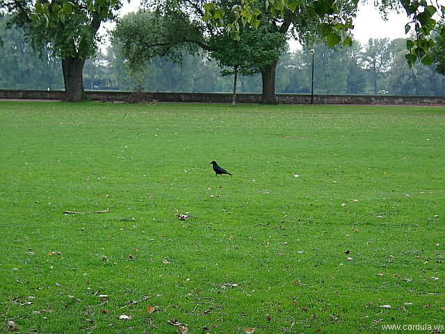 Cordula's Web. A Raven in the Park.