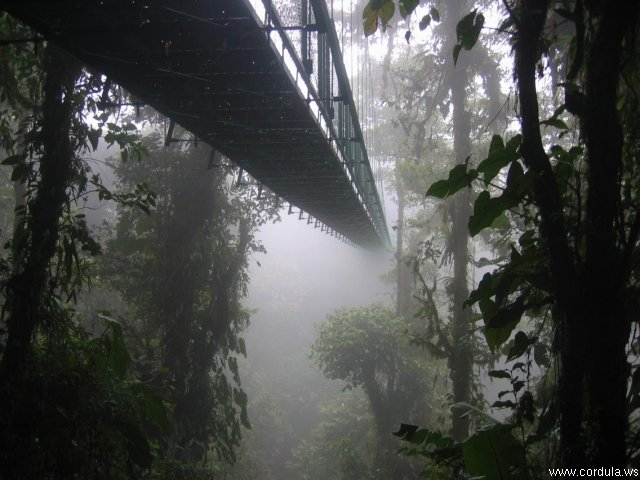 Cordula's Web. Wikicommons. Foggy Bridge.